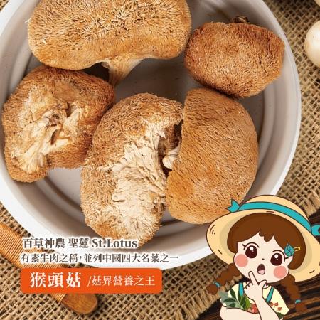 素食者的最愛!菇界之王【猴頭菇】!
